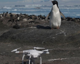 Researchers used a drone to estimate the number of penguins.