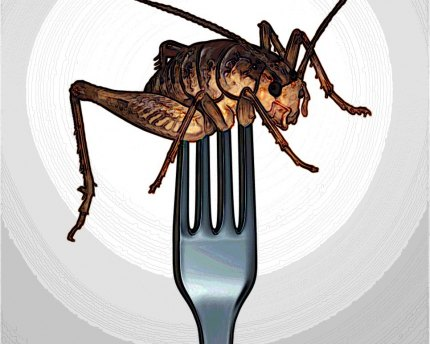 Eating insects has low environmental impact.