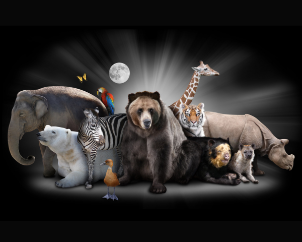 Scientists say Earth is undergoing a sixth mass extinction.